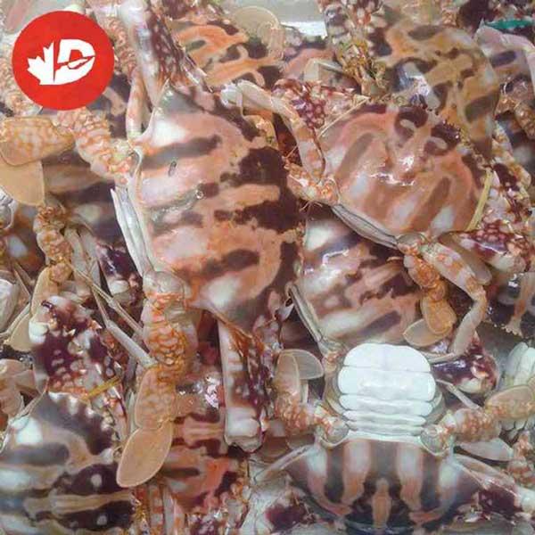 Các loại ghẹ biển